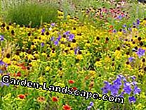 Colorful mix in the garden: mixture
