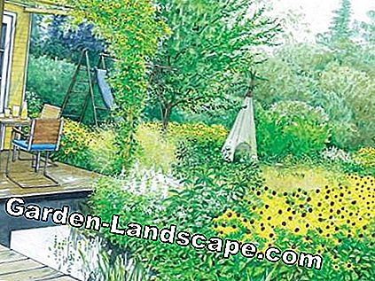 Drawing: Design proposal Indian Garden