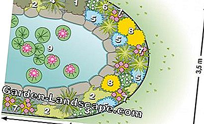 Plant plan spring bed pond edge