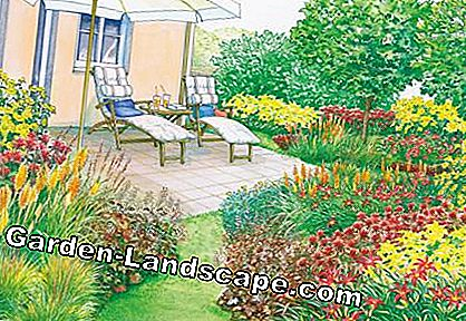 Terrace with loungers perennial beds