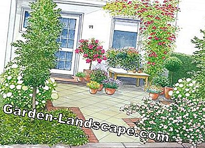 Courtyard garden with bench