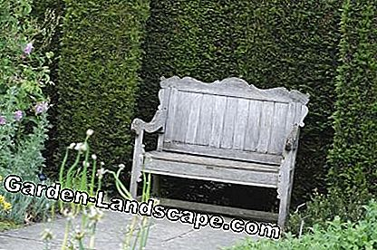 Garden bench hedge