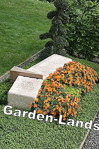 Ideas for grave design and grave planting: design