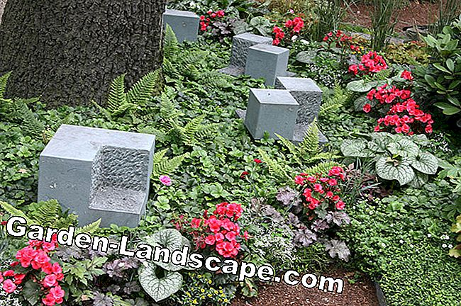 Ideas for grave design and grave planting: grave