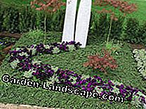 Ideas for grave design and grave planting: ideas
