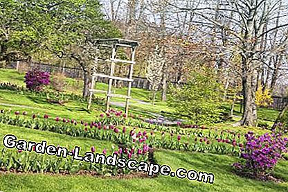 Spring Garden With Tulip Beds