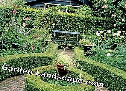 Garden design with boxwood