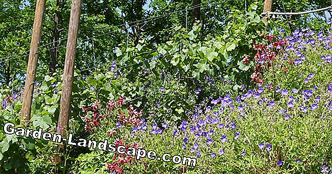 Perennials and shrubs for slope planting