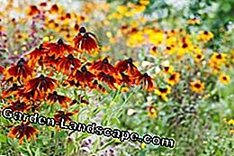 Prairie gardens are easy to care for