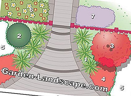 Planting plan: Easy care and attractive all year round