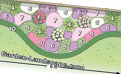 Plant plan perennial flowerbed with roses