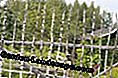 Fence of thin birch trunks
