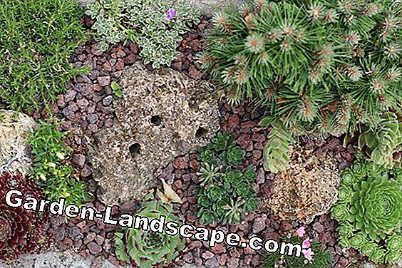 Come Costruire Un Giardino Di Ghiaia : Landscaping: creare un giardino di ghiaia di facile manutenzione