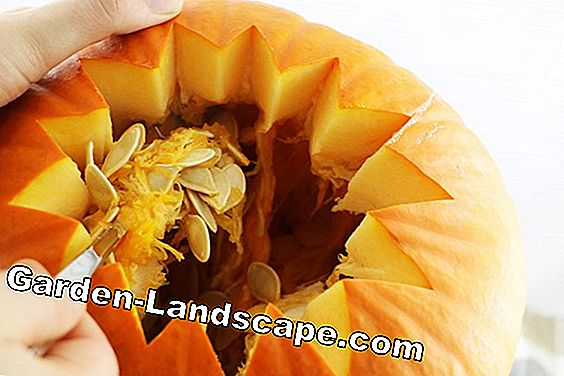 Hollow out pumpkin and ornamental squash to preserve: preserve