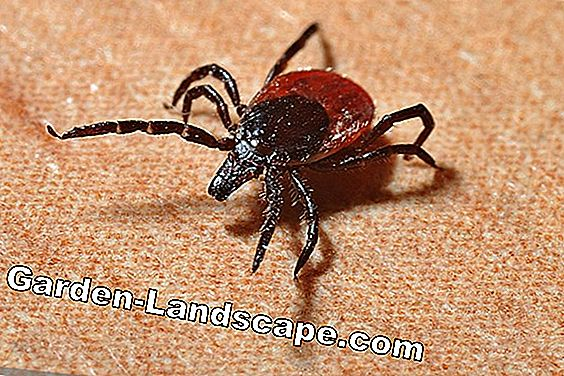 Remedy for ticks and prevention tips