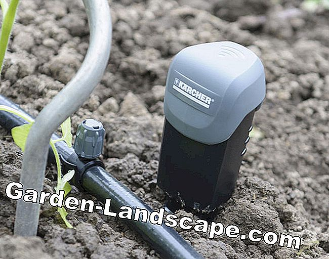 Installer une irrigation goutte à goutte: installer