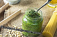 Jagung salad pesto