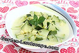 Zucchini soup - 3 delicious recipe ideas
