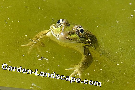 Keep water in the garden pond clear - instead of green and cloudy: clear