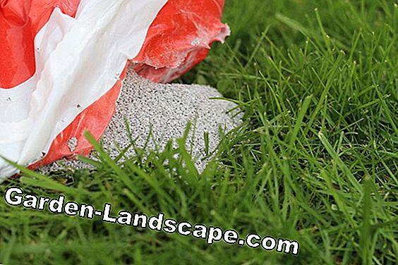 gødning græsplæne efterår