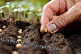 Prepare garden soil optimally - tips for the start of the season