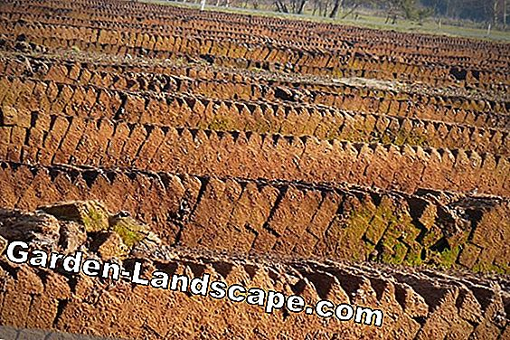 Peat: what is white peat and black peat? Properties and use: garden