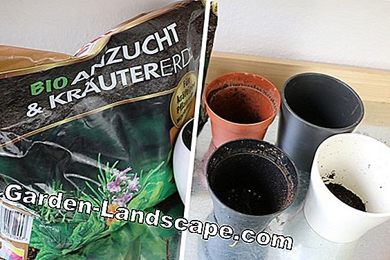 Repotting house plants - instructions for popular green plants