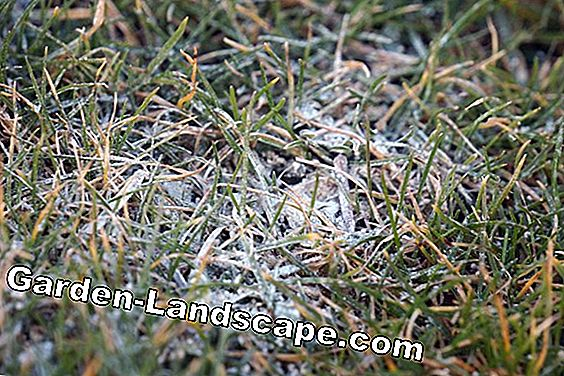 Grass lime against moss - application and lawn limescale: lime