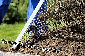 Potting soil or potting soil - what's the difference?