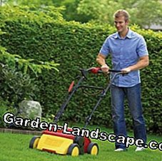 Scarifying cleans the lawn