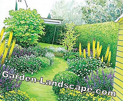 curved lawn path with perennial borders