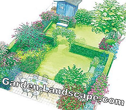 Design dream garden