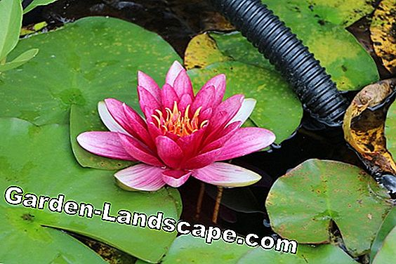 Pond cover to build yourself - Tips for child protection: tips