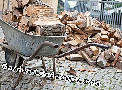 Wooden logs in the wheelbarrow