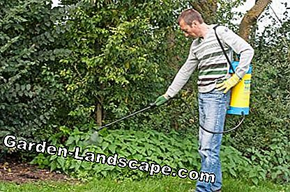 Spray herbicide in de tuin