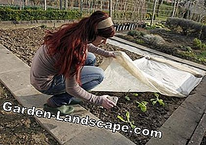Protect salad seedlings with a fleece