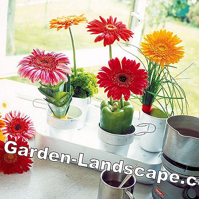 Decoración vegetal de Gerbera