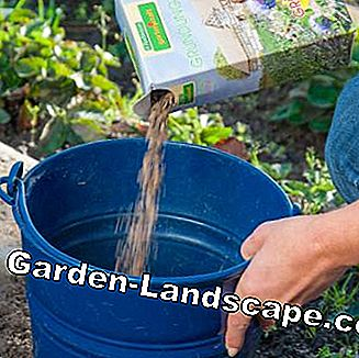 Fill seed into bucket