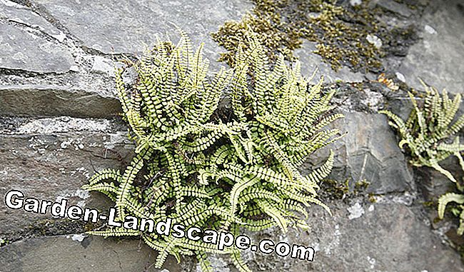 Natural stone walls colorfully plant: plant