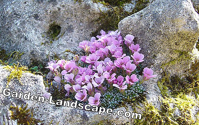 Natural stone walls colorfully plant: plants