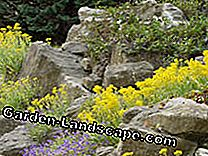 Natural stone walls colorfully plant: joints