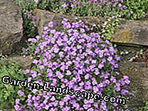Natural stone walls colorfully plant: stone