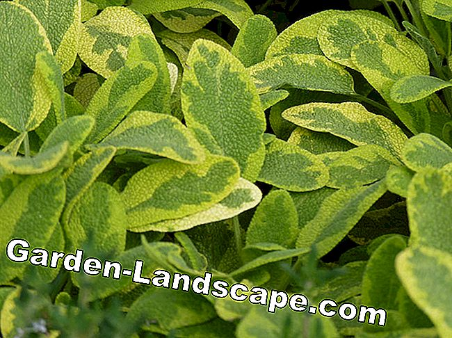 Leaf decoration plants for sun and shade: plants