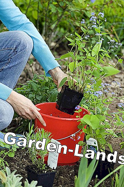 Plan, create and maintain perennial beds