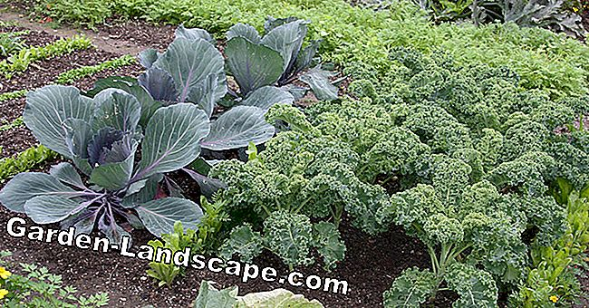 Small area, high yield: Clever planning of a vegetable patch
