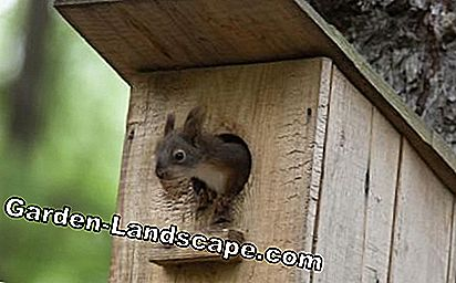 Squirrel in habitation