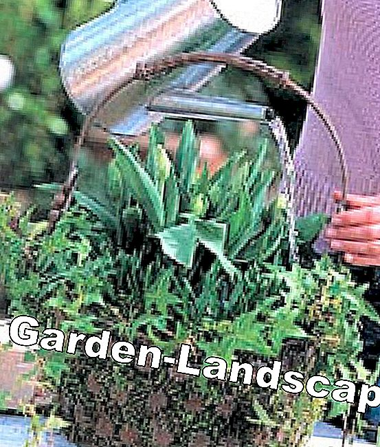 Step by step to the planted spring basket: spring