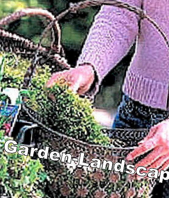 Step by step to the planted spring basket: moss