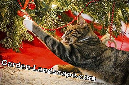 Cat kerstboom