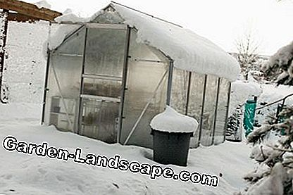 Snow on the roof of a greenhouse